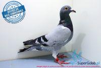 PL-0442-17-4200