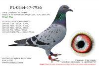 PL-0444-17-7956
