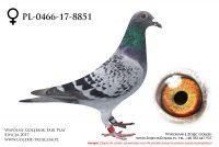 PL-0466-17-8851