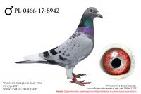 PL-0466-17-8942