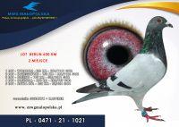 PL 0471 21 1021 – JUSZCZYK ROBERT – 2 m SUPER FINAŁ odległość 600km!!!, 52m FINAŁ !!!