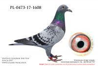PL-0473-17-1608