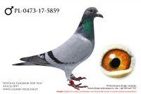 PL-0473-17-5859
