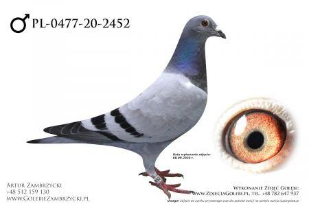 PL-0477-20-2452 - prawdopodobnie samczyk