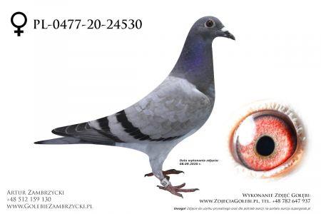 PL-0477-20-2453 - prawdopodobnie samiczka