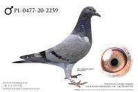 PL-0477-20-2459 - prawdopodobnie samczyk