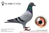 PL-0480-17-5744