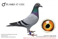 PL-0482-17-1331