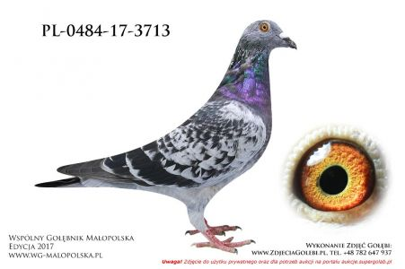 PL-0484-17-3713