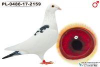 PL-0486-17-2159_samiec
