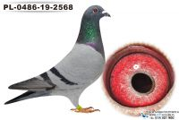 PL-0486-19-2568