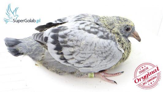 PL-19-1120253