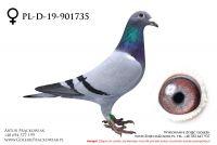 PL-D-19-901735 - samiczka