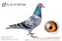 PL-D-19-901768 - samczyk