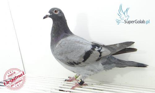 PL-DE-19-953059