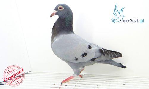 PL-DERBY-19-1157398