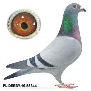 PL-DERBY-583448