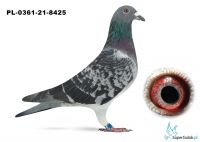 Poz.1 PL-0361-21-8425 ♂