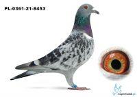 Poz.10 PL-0361-21-8453 ♀
