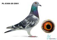 Poz. 10 PL-0369-20-2981