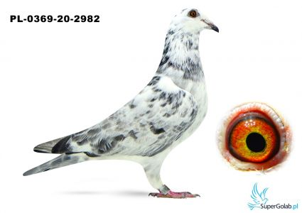 Poz. 11 PL-0369-20-2982