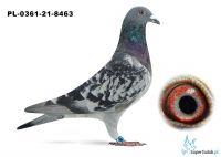 Poz.12 PL-0361-21-8463 ♂