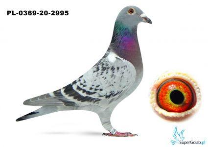 Poz. 12 PL-0369-20-2995