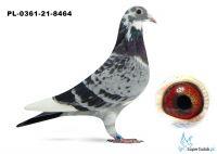 Poz.13 PL-0361-21-8464 ♀