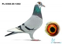 Poz. 13 PL-0368-20-1262
