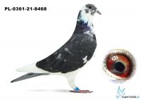 Poz.14 PL-0361-21-8468 ♀