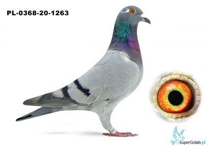 Poz. 14 PL-0368-20-1263