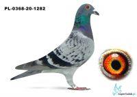 Poz. 17 PL-0368-20-1282