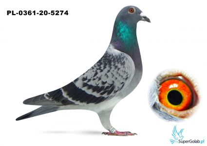Poz. 3 PL-0361-20-5274