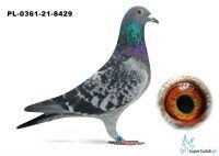 Poz.3 PL-0361-21-8429 ♂