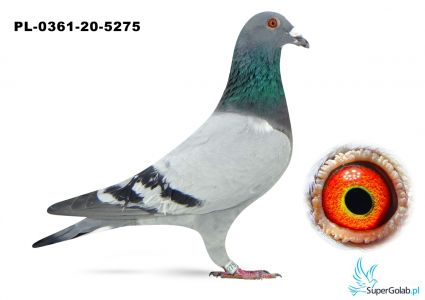 Poz. 4 PL-0361-20-5275