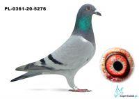 Poz. 5 PL-0361-20-5276