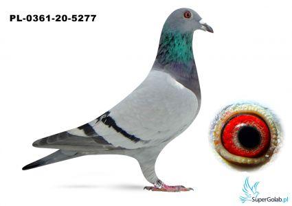 Poz. 6 PL-0361-20-5277