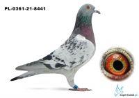 Poz.6 PL-0361-21-8441 ♂