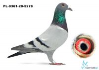 Poz. 7 PL-0361-20-5278