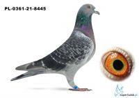 Poz.7 PL-0361-21-8445 ♂