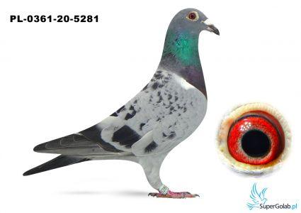 Poz. 8 PL-0361-20-5281