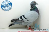 SK-172901-595